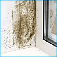 Solutions for Moisture on Windows